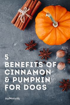Pumpkin spice season is (FINALLY!) here. Pumpkin is a nutritious addition to your dog's dish. It's a good source of … ✅ Vitamins A, E and C ✅ .Potassium, copper, manganese and iron ✅ Fiber It is also a great source of antioxidants. But pumpkin is even better for your dog when paired with cinnamon! Here's how to give it safely.