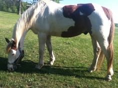 How to Make a Fly Spray for Horses With Sensitive Skin