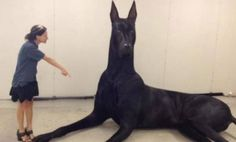 These giants are anything but a myth, here are abnormally large animals that really do exist!
