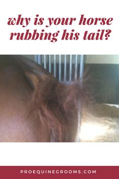 Tail rubbing reasons http://www.proequinegrooms.com/tips/manes-and-tails/tail-rubbing/