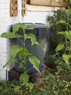 You can use rain water in your gardens thanks to this DIY rain barrel. Learn how to build a rain barrel to save water and to save money. Your plants will get the hydration they need, and your budget will be happy too. Diy Garden, Garden Landscaping, Home And Garden, Garden Living, Outdoor Projects, Garden Projects, Ways To Save Water, All Nature, Garden Inspiration