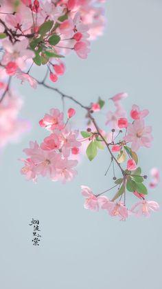 Cherry Blossom Wallpaper, Flower Phone Wallpaper, Galaxy Wallpaper, Aesthetic Pastel Wallpaper, Scenery Wallpaper, Aesthetic Wallpapers, Beautiful Flowers Wallpapers, Pretty Wallpapers, Beautiful Fantasy Art
