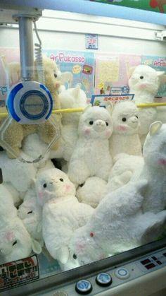 OMG son alpacas !!!!!!!!!!!!