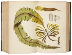 Phycologia Britannica by William Henry Harvey, 1846-51. 360 lithographed plates, printed in colour and some finished by hand.