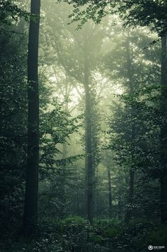 The jungle - A green misty forest in the Netherlands. Dark Green Aesthetic, Aesthetic Light, Nature Aesthetic, Misty Forest, Dark Forest, Adventure Aesthetic, Different Aesthetics, Slytherin Aesthetic, Vsco