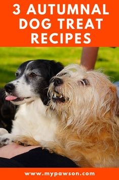 Want to spoil your pooch this autumn? Try one of our range of autumnal dog treat recipes to show Fido how much you love them Dog Treat Recipes, Healthy Dog Treats, Dog Food Recipes, Dog Health Tips, Pet Health, Dog Care Tips, Pet Care, Dog Nutrition, Nutrition Guide