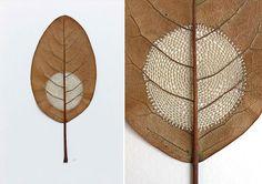 Conheça a arte de Susanna Bauer, artista que utiliza folhas e crochê para fazer delicadas e encantadoras esculturas.