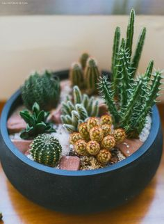 The market in cactus house plants is booming and with very good reason. These prickly little guys are great fun easy to keep and very attractive. 69 excellent diy small cactus succulent decoration ideas 1 the rise of roots of . Small Cactus Plants, Cactus House Plants, Cactus Decor, Cacti And Succulents, Planting Succulents, Cactus Planters, Indoor Cactus, Mini Plants, Indoor Plants