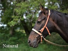 Ivy's Bitless Bridle Natural on dark horse
