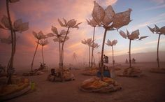 "The art installation Pulse & Bloom is seen during the Burning Man 2014 ""Caravansary"" arts and music festival in the Black Rock Desert of Nevada"