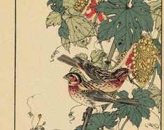 "Items similar to Japanese Antique Original Woodcut Print, Imao Keinen, ""Farfugium japonicum, Meadow Bunting"" on Etsy Nutmeg Tree, Eurasian Magpie, Cypress Vine, Green Pigeon, Greenfinch, Cherokee Rose, Golden Pheasant, Barn Swallow, China Rose"