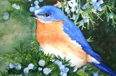 bluebird watercolor painting art archival print of by carolsapp