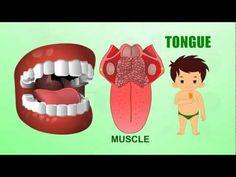 Tongue - Human Body Parts - Pre School - Animated Videos For Kids Human Body Unit, Human Body Parts, Preschool Body Theme, Senses Activities, Children Activities, Body Parts For Kids, Human Teeth, My Father's World, School Health