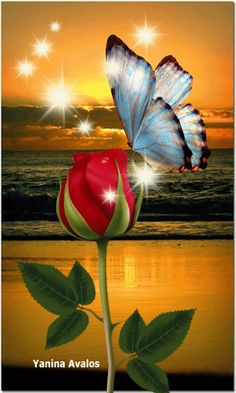 Rose with luv Beautiful Flowers Wallpapers, Beautiful Rose Flowers, Beautiful Butterflies, Pretty Flowers, Beautiful Birds, Beautiful Love Pictures, Beautiful Gif, Butterfly Pictures, Flower Images