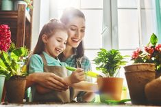 Photo about Cute child girl helps her mother to care for plants. Mom and her daughter engaged in gardening near window at home. Happy family in spring day. Image of care, beauty, childhood - 90240812