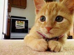 cat, kitten, ginger, beautiful, animal