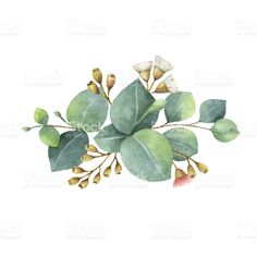 Watercolor bouquet with green eucalyptus leaves and branches. royalty-free stock vector art