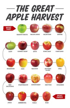 Find out more about the types of apples, compare apple sweetness and to choose your favorite type of apples at Sprouts Farmers Market. Apple Chart, Apple Facts, Healthy Snacks, Healthy Recipes, Healthy Eats, Apple Types, Apple Varieties, Apple Harvest, Food Charts