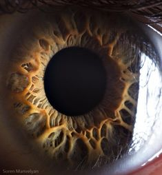 """Muchas personas afirman que """"los ojos son el espejo del alma"""", pero ¿realmente los hemos visto de cerca? Honestamente puedo decir que nunca había tenido la oportunidad de verlos tan de …"""