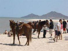 Enjoy horseback riding in San Felipe, Baja California, Mexico. $15 for half hour.    #sanfelipehorsebackriding