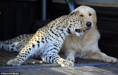 odd animal couples pictures - Google Search
