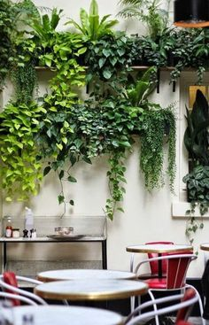 Garden Wall Designs, Cool House Designs, Plant Wall, Plant Decor, Hanging Plants, Indoor Plants, Vertical Garden Plants, Garden Design Pictures, Decoration Plante