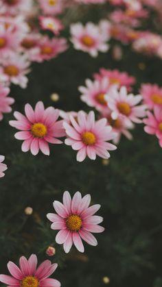 Aesthetic Iphone Wallpaper, Nature Wallpaper, Aesthetic Wallpapers, Aesthetic Colors, Flower Aesthetic, Beautiful Flowers Wallpapers, Cute Wallpapers, Big Flowers, Pretty Flowers