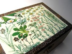 Antique Illustration Box
