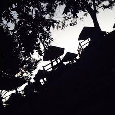 Lost in the dark forest  lol #vscocam #vsco by vincentmolano_