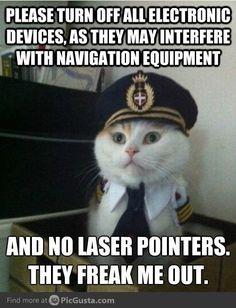 Captain Kitty