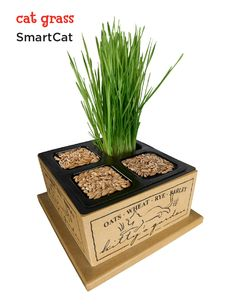 Treat your cat to homegrown organic oats, wheat, rye and barley with SmartCat cat grass.