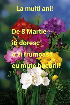 8 Martie, Happy Birthday, Plant, Happy Brithday, Urari La Multi Ani, Happy Birthday Funny, Happy Birth