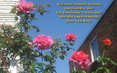 Proverbs 14:6