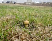 Mushroom Nano Micro Cache Geocache geocaching Container