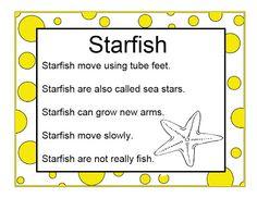 Brilliant Bundles: Preschool Starfish Activities for an Ocean Theme Ocean Lesson Plans, Preschool Lesson Plans, Preschool Projects, Preschool Activities, Beach Theme Preschool, Ocean Activities, Alphabet Activities, Classroom Activities, Ocean Unit