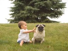 asking for trouble. babies + dogs don't mix well when allowed unrestrained interaction. #childsafety  #dogtips