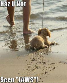 Dog no want water