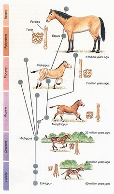 evolution of animals - Google Search