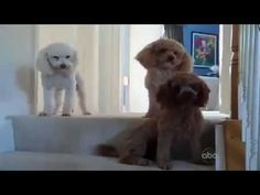 Dog Unable to Hide Its Obvious Guilt | Gawker