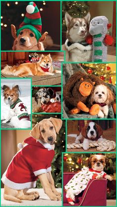 Christmas Dogs and Puppies to warm your heart!