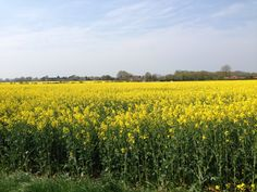 fields in Norfolk Norfolk, Hungary, Fields, Vineyard, Bees, Places, Honey, Photography, Outdoor