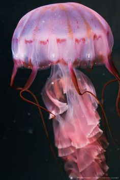 Pink jelly fish skirt--I'm absolutely fascinated by jelly fish I could watch them for days on end...: