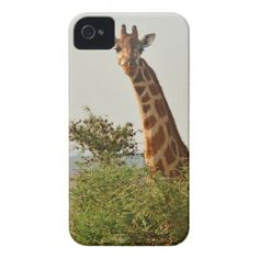 "==>>Big Save on          	Young Giraffe Hiding ""behind bush"" iPhone 4 Cover           	Young Giraffe Hiding ""behind bush"" iPhone 4 Cover We have the best promotion for you and if you are interested in the related item or need more information reviews from the x customer who a...Cleck Hot Deals >>> http://www.zazzle.com/young_giraffe_hiding_behind_bush_iphone_4_cover-179418409909756481?rf=238627982471231924&zbar=1&tc=terrest"