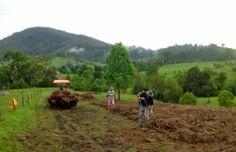 Our crop of certified biodynamic garlic is in the ground. #certifiedorganic #garlic #farm