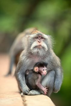 The monkey by Jalu Pamuncar this looks like the lorax's wife and kid