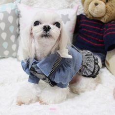 """""""베베 다이어트해서  300g 빠졌더니, SM은 쪼꿈 커진 ㅋㅋ 결론은 그래도 이뿌닷 ㅋㅋ . . . . #베베미엘 #견스타그램 #개스타그램 #독스타그램 #인스타독 #말티즈 #instadog #instapet #maltese #dogstagram #dog #puppy…"""""""