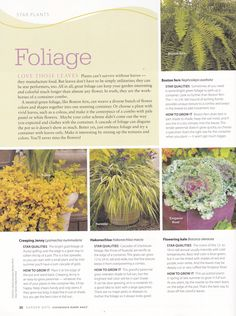 Container Gardening Star Foliage - part A