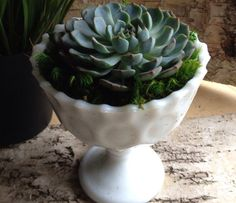 Succulent & Vintage Inspired Milk-glass Planter bowl. Succulent Gift for Home / Desk Decoration / Succulent Planter