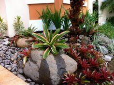 67 Mejores Imagenes De Bromelias Y Tinlazias Jardineria