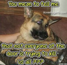 """The German Shepherd Hope you're doing well..From your friends at phoenix dog in home dog training""""k9katelynn"""" see more about Scottsdale dog training at k9katelynn.com! Pinterest with over 21,400 followers! Google plus with over 280,000 views! You tube with over 500 videos and 60,000 views!! LinkedIn over 10,400 associates! Proudly Serving the valley for 12 plus years! now on instant gram! K9katelynn"""